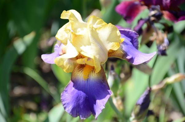 Um dia no Giardino dell'Iris de Florença