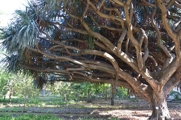 jardim_botanico_palermo05