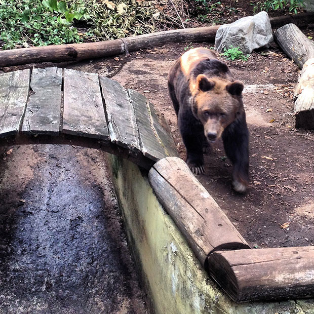 Qual o nome do urso? É uma fêmea, Giulietta!
