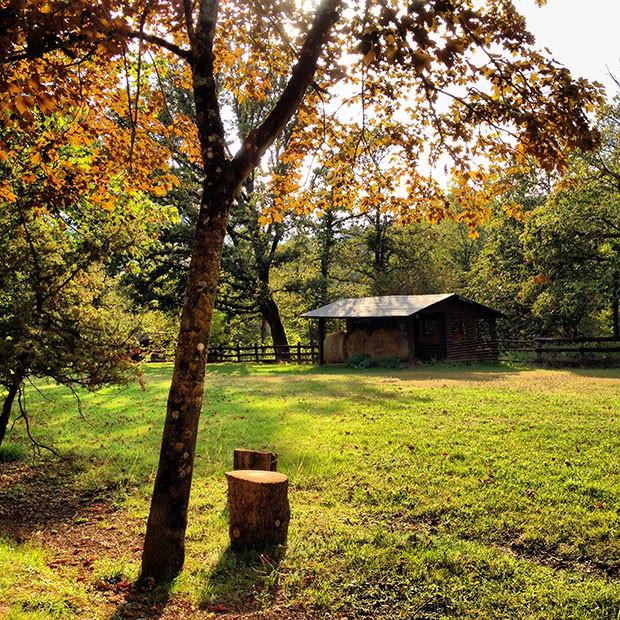 O início do outono no zoológico de Poppi