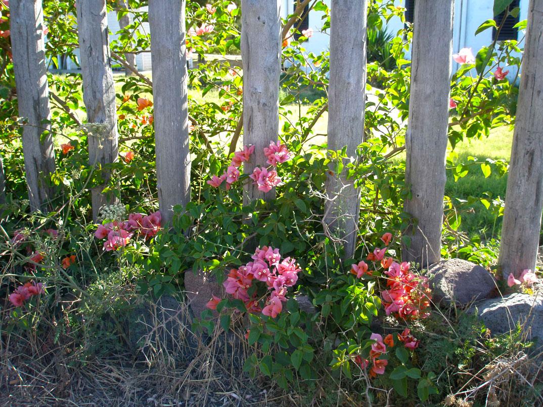 pelo caminho, muitas flores