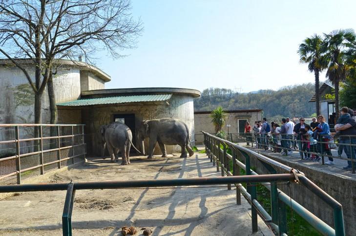 Os elefantes