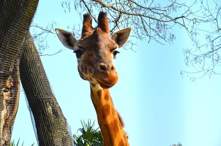 zoo_pistoia11