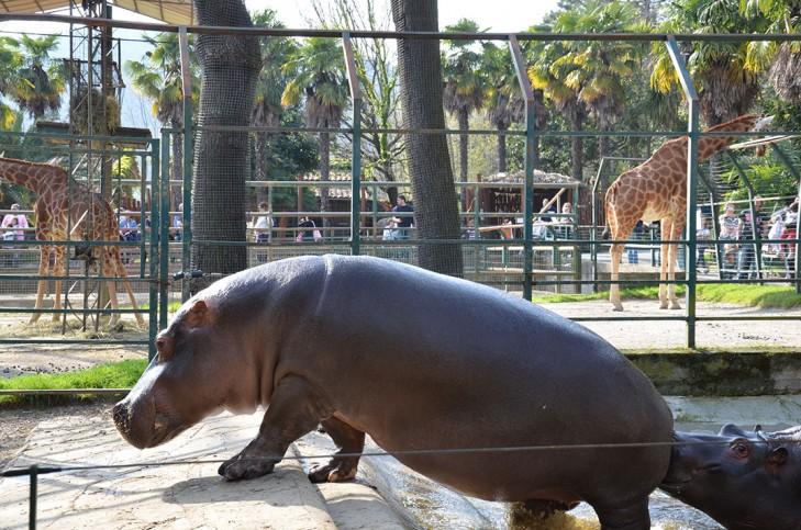 zoo_pistoia13