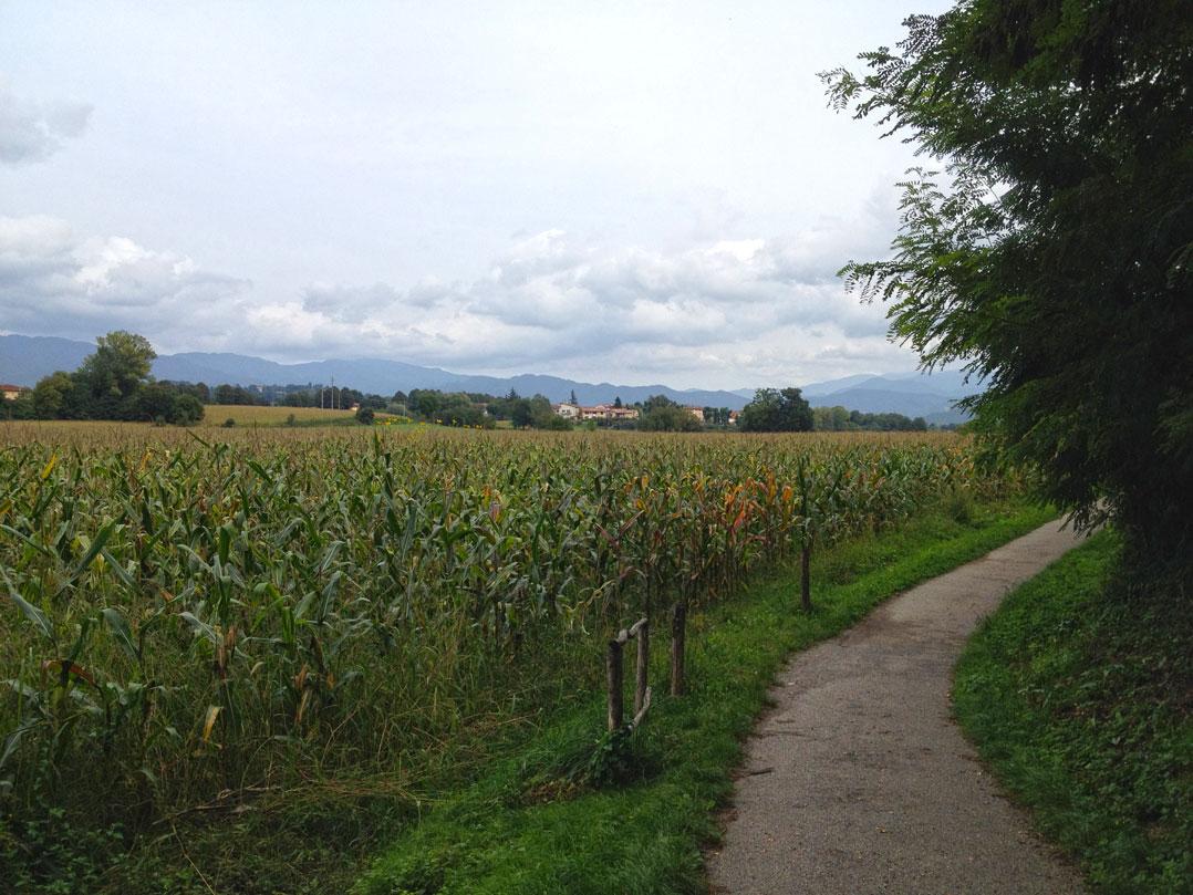 Tinha uma plantação de milho no caminho...
