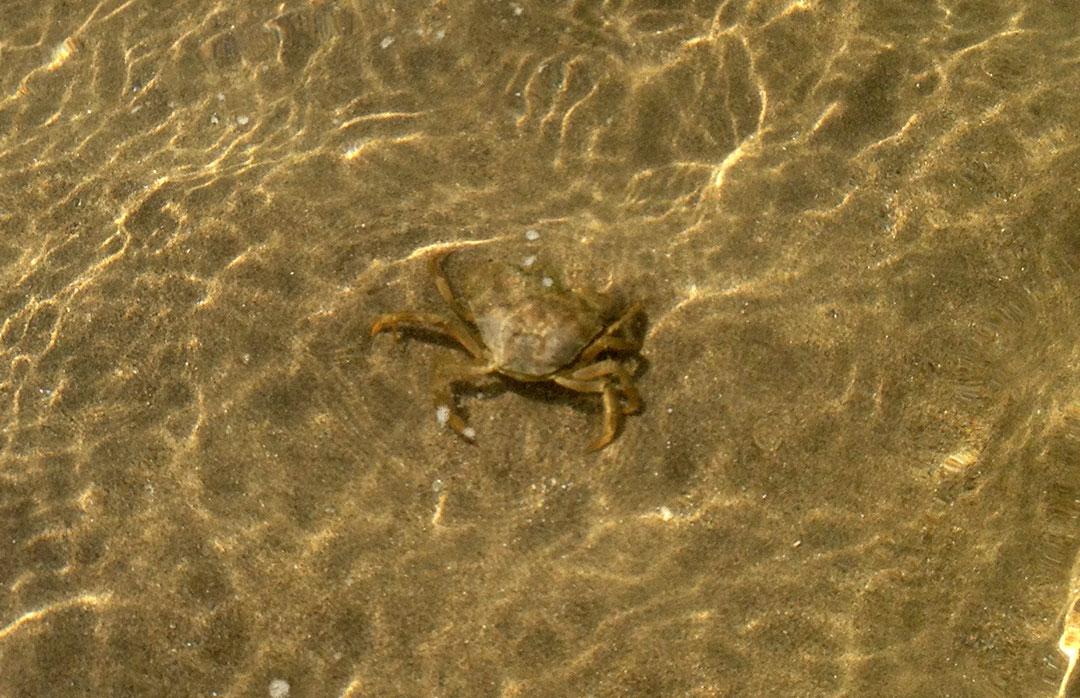 O mar limpo e cristalino de Castiglione della Pescaia na Toscana