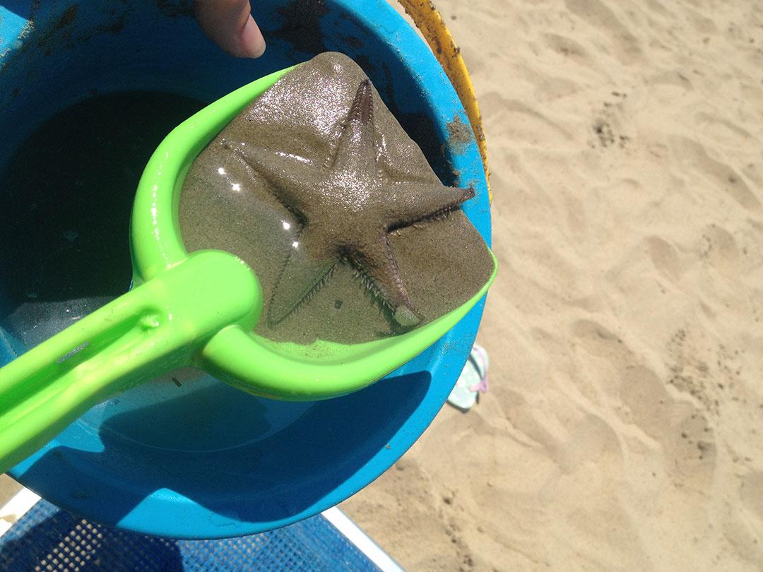 Uma estrela do mar de verdade: tiramos fotos e devolvemos ao mar!