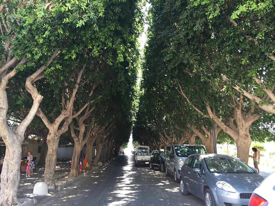 O lugar perfeito para estacionar o carro no verão? Sob a sombra dessas árvores, na rua que dá na porta da cidade...